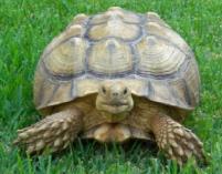 Hugo..la tortuga