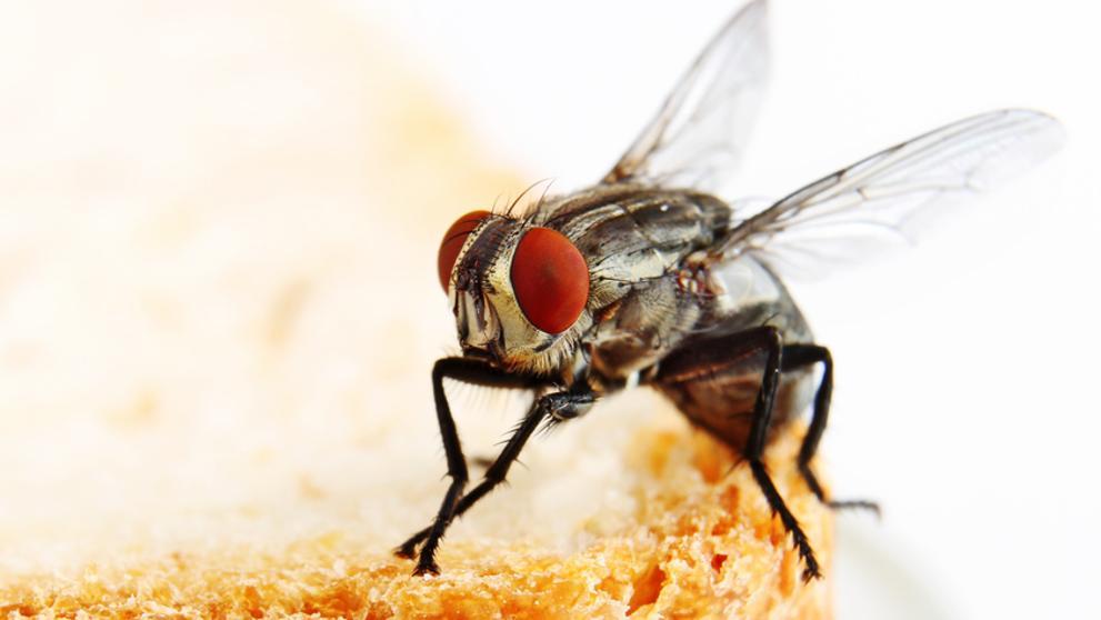 El balneario de las moscas